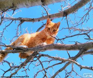Cat on a branch puzzle