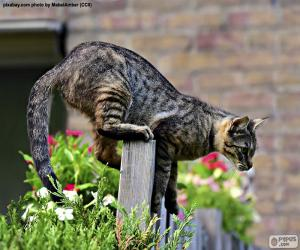 Cat on a fence puzzle