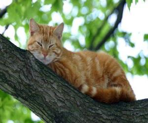 Cat resting on the branch of a tree puzzle