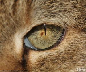 Cat's eye puzzle