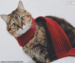 Cat wiht scarf puzzle