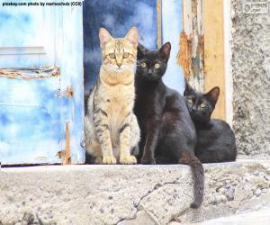 Cats at the door puzzle