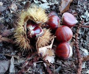 Chestnuts, one of the typical fruits of autumn puzzle