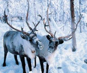 Christmas Reindeer in the forest puzzle