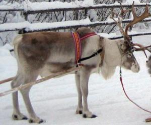 Christmas reindeer pulling a sleigh puzzle