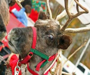 Christmas reindeer with a collar with jingle bells puzzle