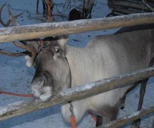 Christmas reindeer puzzle