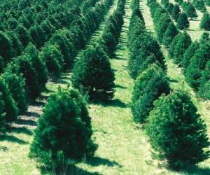 Christmas tree farm puzzle