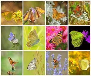 Collage of butterflies puzzle