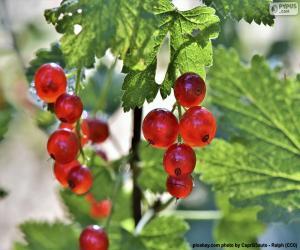 Corinthian grape puzzle