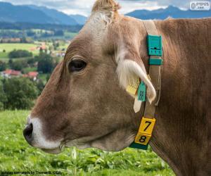 Cow head puzzle