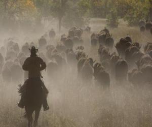 Cowboy leading a flock puzzle
