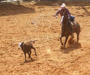Cowboy riding a horse and catching a head of cattle with the lasso puzzle
