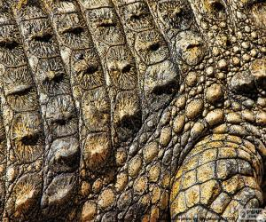Crocodile skin puzzle