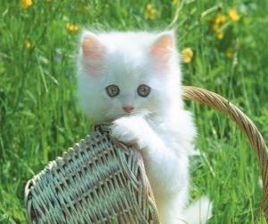 Cute white kitten puzzle