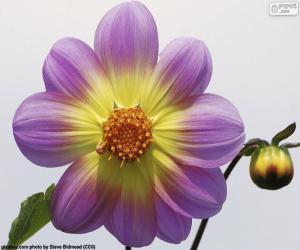 Dalia Flower puzzle