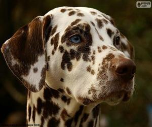 Dalmatian head puzzle