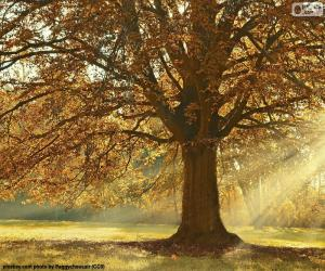 Deciduous tree in autumn puzzle