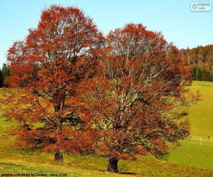 Deciduous trees puzzle
