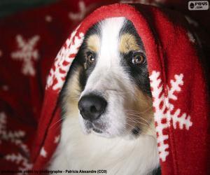 Dog Christmas puzzle