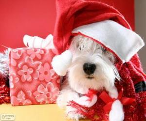 Dog with a Santa Claus hat and his gift puzzle
