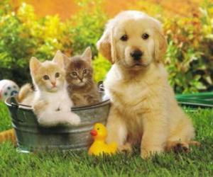 Doggy with two kittens puzzle