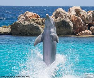 Dolphin doing a trick puzzle