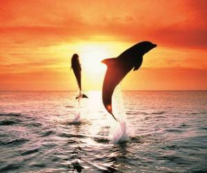 Dolphins at sunset puzzle