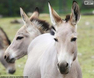 Donkey head puzzle