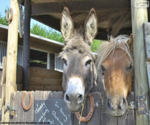 Donkey heads and pony puzzle