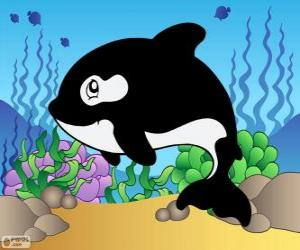 Drawing of a orca puzzle