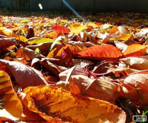 Dry leaves in autumn puzzle