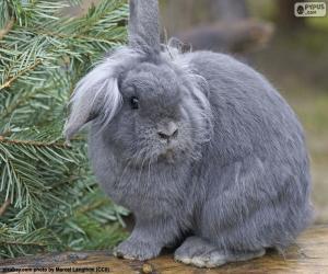Dwarf rabbit puzzle