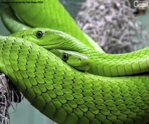 Eastern green mamba puzzle