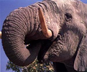 Elephant eating puzzle