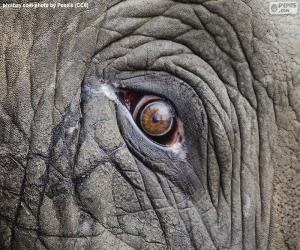 Elephant eye puzzle