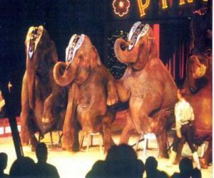 Elephants trained puzzle