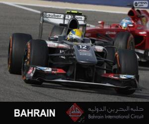 Esteban Gutierrez - Sauber - 2013 Bahrain International Circuit puzzle