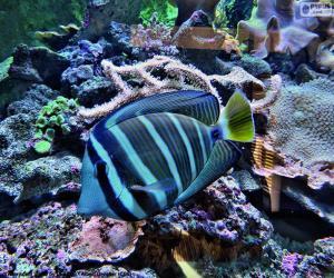 Exotic fish puzzle