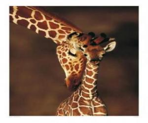 Family of giraffes puzzle