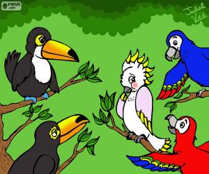 Five birds of Julieta Vitali puzzle