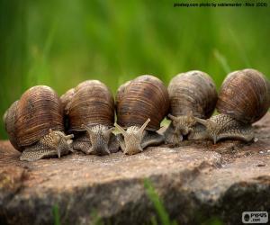 Five snails puzzle