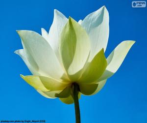 Flower Lotus White puzzle