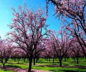 Flowering almond trees in spring puzzle