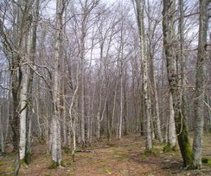 Forest without leaves in winter puzzle