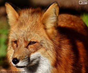 Fox head puzzle