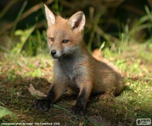 Fox puppy puzzle