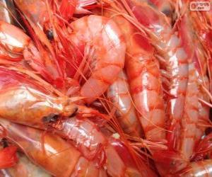 Fresh prawns puzzle