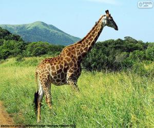 Giraffe in Savannah puzzle