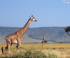 Giraffe in the landscape puzzle